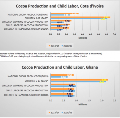 Tulane University findings on cocoa production